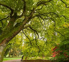 Westonbirt Autumn XII by Chris Tarling