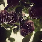 Webs among apples by Joshua Greiner