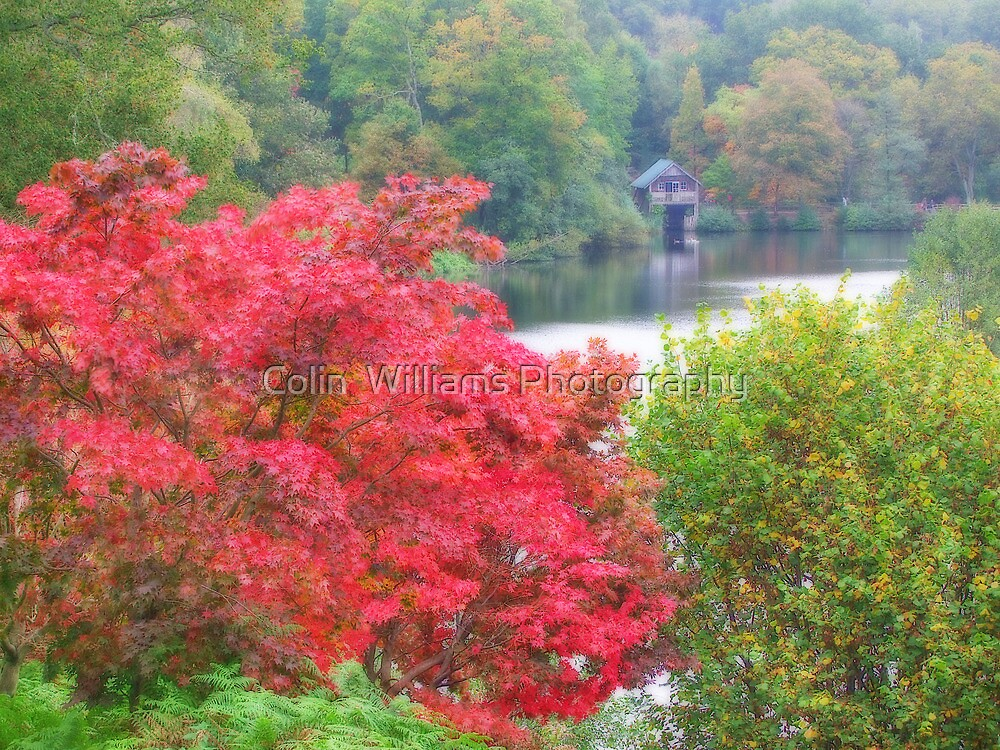 The Boathouse At Winkworth Arboretum - Orton Effect by Colin  Williams Photography