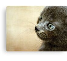 Kitten XV Canvas Print