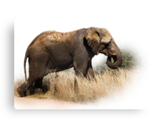 TOOTHLESS ELEPHANT Canvas Print