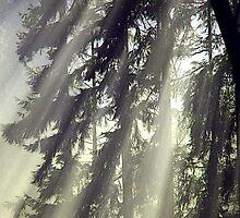 Fog & Sunlight by DorotheaK