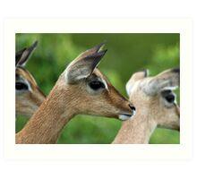 Impala juvenile Art Print