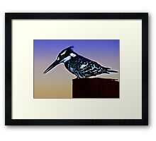 PIED KINGFISHER Framed Print