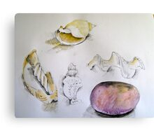 shells and stone Canvas Print
