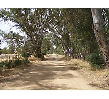 Where are you leading me?! Country dirt road, Springton.S.A. Photographic Print