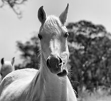 My Name is MR ED... by Ali Brown
