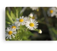 wild white flower with dew Canvas Print