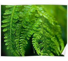 Green Focus Poster