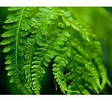 Green Focus Photographic Print