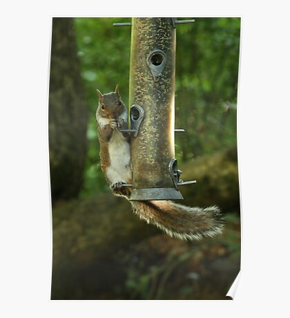 Squirrel Acrobatics Poster