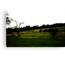 Sheep Farm Landscape Canvas Print
