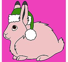 Light Pink Arctic Hare with Christmas Green Santa Hat Photographic Print