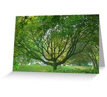 Through the branches Greeting Card