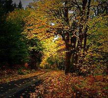 The Old Back Road by Charles & Patricia   Harkins ~ Picture Oregon