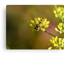 Hoverfly on Fennel Canvas Print