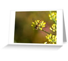 Hoverfly on Fennel Greeting Card