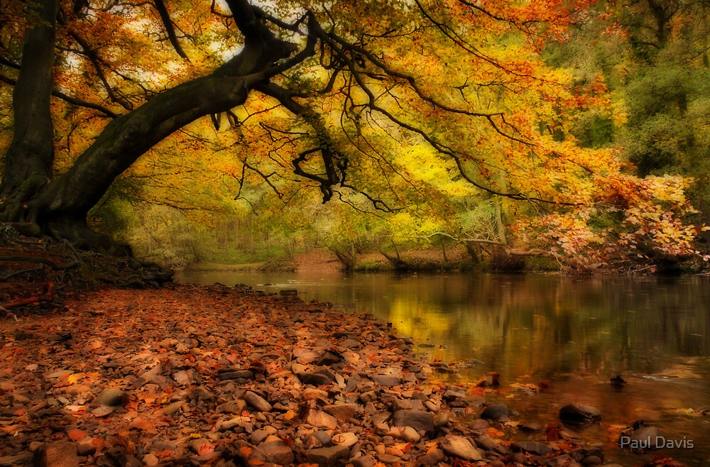 Nidd Gorge in Autumn by Paul Davis