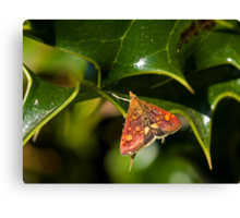 Mint Moth Micro Moth on Holly Canvas Print