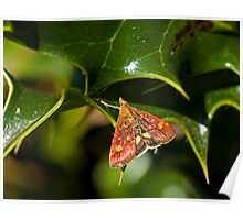 Mint Moth Micro Moth on Holly Poster