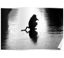 Silhouette of chacma baboon  Poster