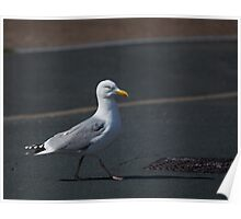Seagull crossing road Poster