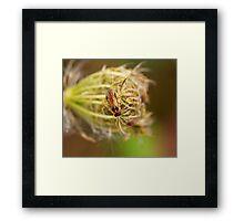 Turnip Sawfly Framed Print