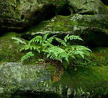 Fern and Rocks by Sue Robinson