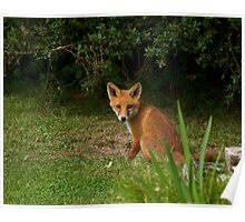 Red Fox Cub sitting Poster