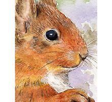 Red Squirrel by Lisa Marie Robinson