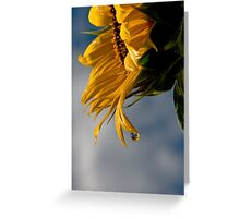 Water Drop & Sunflower Greeting Card