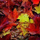 Autumn colors   by melek0197