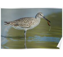 Willet lunch Poster