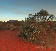 Uluru Evening by Ursula Rodgers