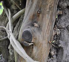Dog in a Tree trunk by roggcar