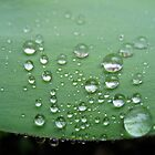 A Collection of Drops by lindsycarranza