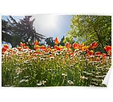 A Field Of Tulips In A Garden Poster