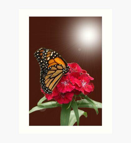 Beauty of the Monarch Art Print