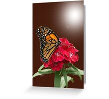 Beauty of the Monarch Greeting Card