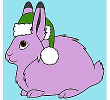Light Purple Arctic Hare with Christmas Green Santa Hat Photographic Print