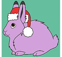 Light Purple Arctic Hare with Christmas Red Santa Hat Photographic Print