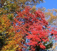 Autumn's Reflected Glory by Paula Tohline  Calhoun