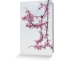 Redbuds In Fog Greeting Card