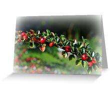 Cotoneaster Bush Christmas Card Greeting Card