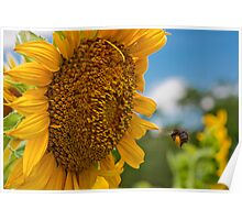Bee & Sunflower Poster