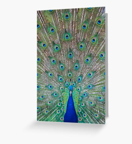 Peacock 1 of 3 Greeting Card
