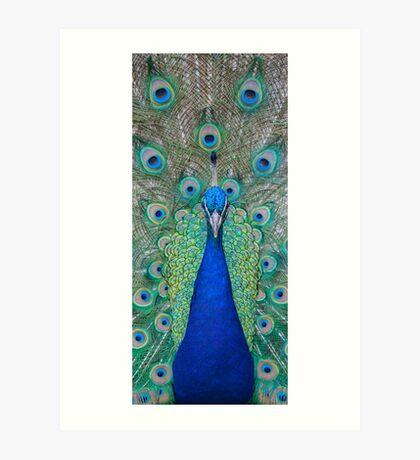 Peacock 2 of 3 Art Print