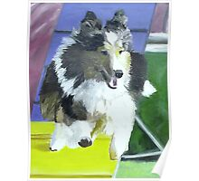 Sheltie on Agility Dog Walk Poster
