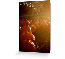 Pumpkins in the fullness of Autumn, 2012 Greeting Card
