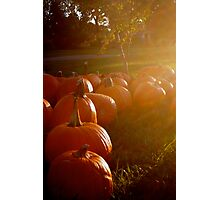 Pumpkins in the fullness of Autumn, 2012 Photographic Print